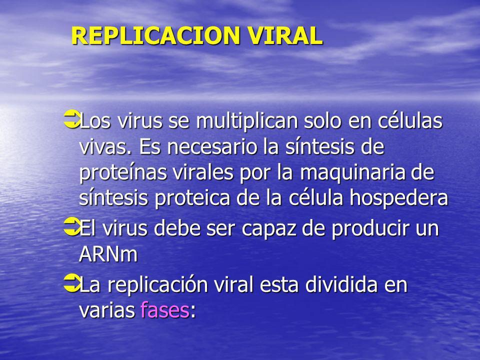 REPLICACION VIRAL REPLICACION VIRAL Los virus se multiplican solo en células vivas. Es necesario la síntesis de proteínas virales por la maquinaria de
