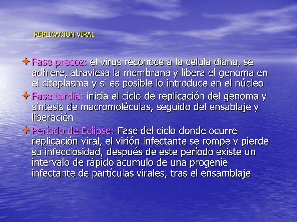 REPLICACION VIRAL REPLICACION VIRAL Fase precoz: el virus reconoce a la celula diana, se adhiere, atraviesa la membrana y libera el genoma en el citop