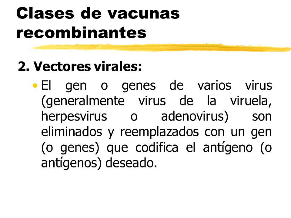 Clases de vacunas recombinantes 2. Vectores virales: El gen o genes de varios virus (generalmente virus de la viruela, herpesvirus o adenovirus) son e
