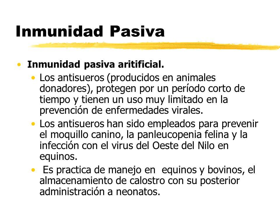 Inmunidad Pasiva Inmunidad pasiva aritificial. Los antisueros (producidos en animales donadores), protegen por un período corto de tiempo y tienen un