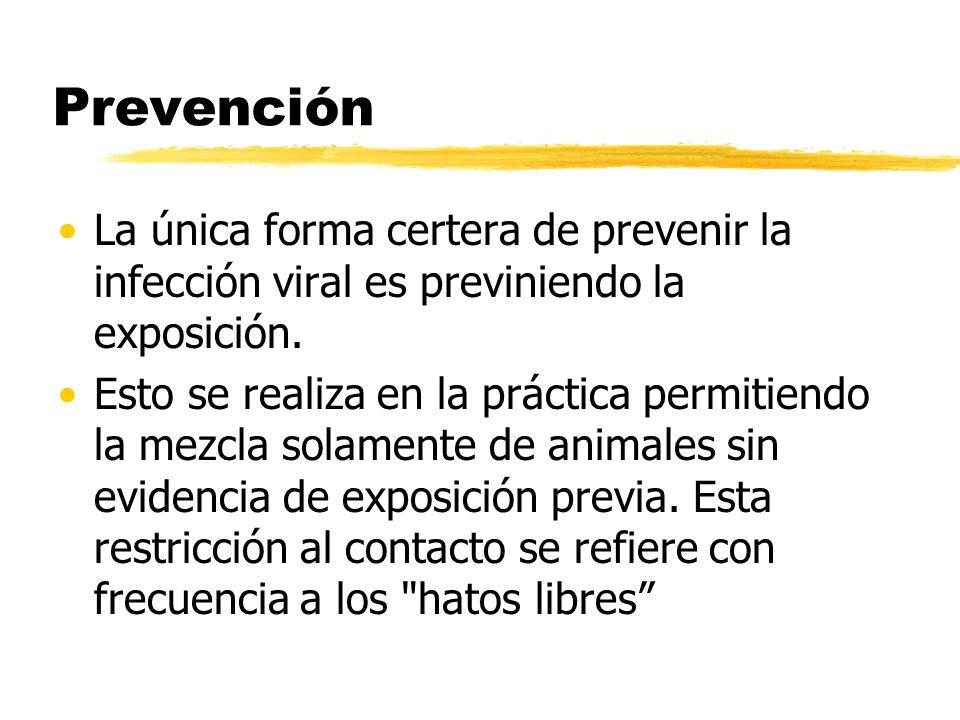 Prevención La única forma certera de prevenir la infección viral es previniendo la exposición. Esto se realiza en la práctica permitiendo la mezcla so