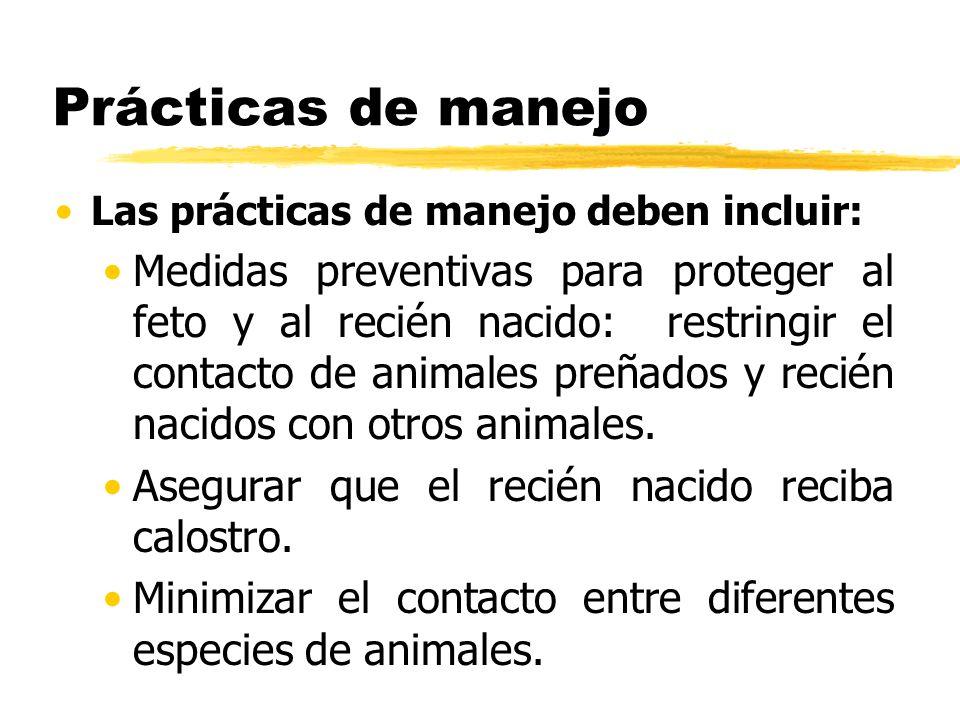 Prácticas de manejo Las prácticas de manejo deben incluir: Medidas preventivas para proteger al feto y al recién nacido: restringir el contacto de ani
