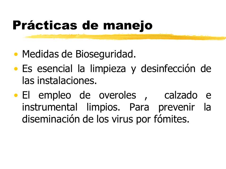 Prácticas de manejo Medidas de Bioseguridad. Es esencial la limpieza y desinfección de las instalaciones. El empleo de overoles, calzado e instrumenta