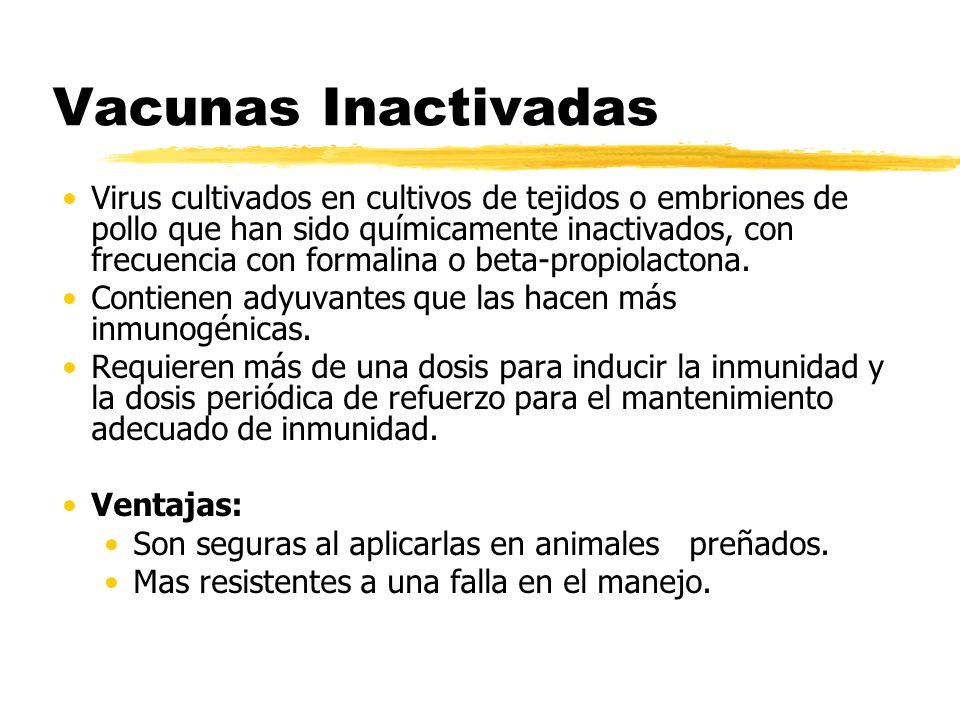 Vacunas Inactivadas Virus cultivados en cultivos de tejidos o embriones de pollo que han sido químicamente inactivados, con frecuencia con formalina o