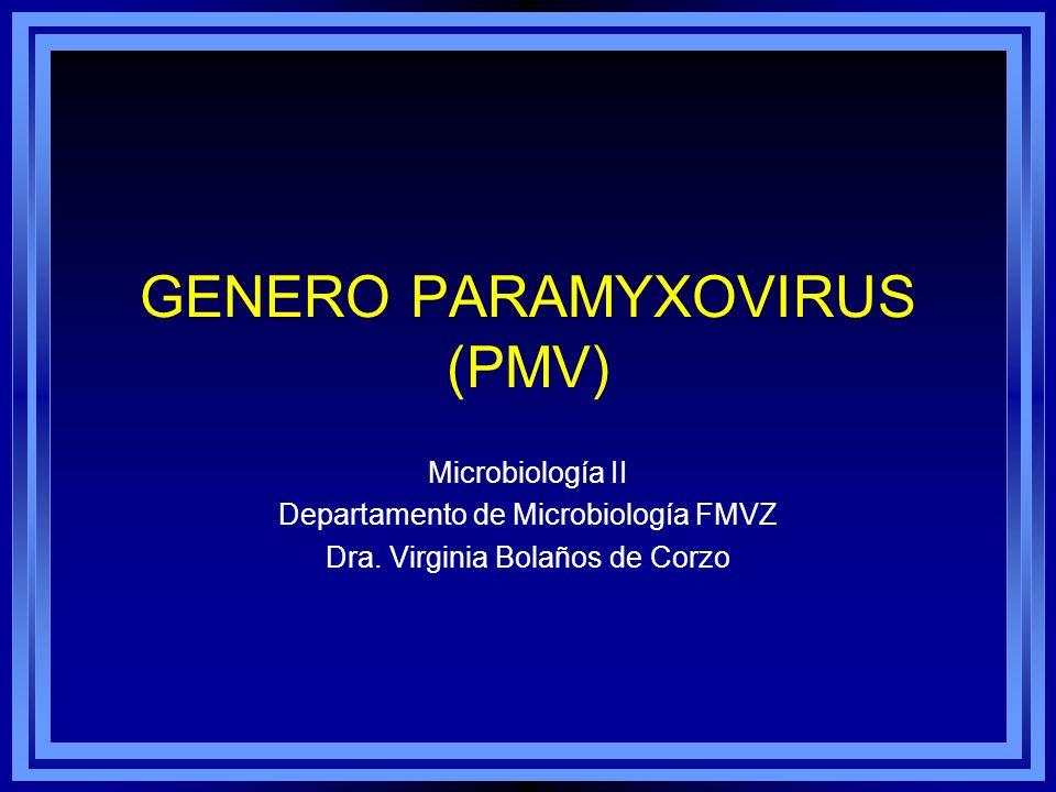 GENERO PARAMYXOVIRUS (PMV) Microbiología II Departamento de Microbiología FMVZ Dra. Virginia Bolaños de Corzo