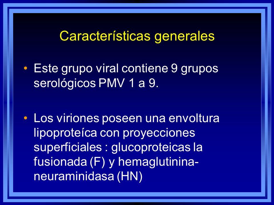 Características generales Este grupo viral contiene 9 grupos serológicos PMV 1 a 9. Los viriones poseen una envoltura lipoproteíca con proyecciones su