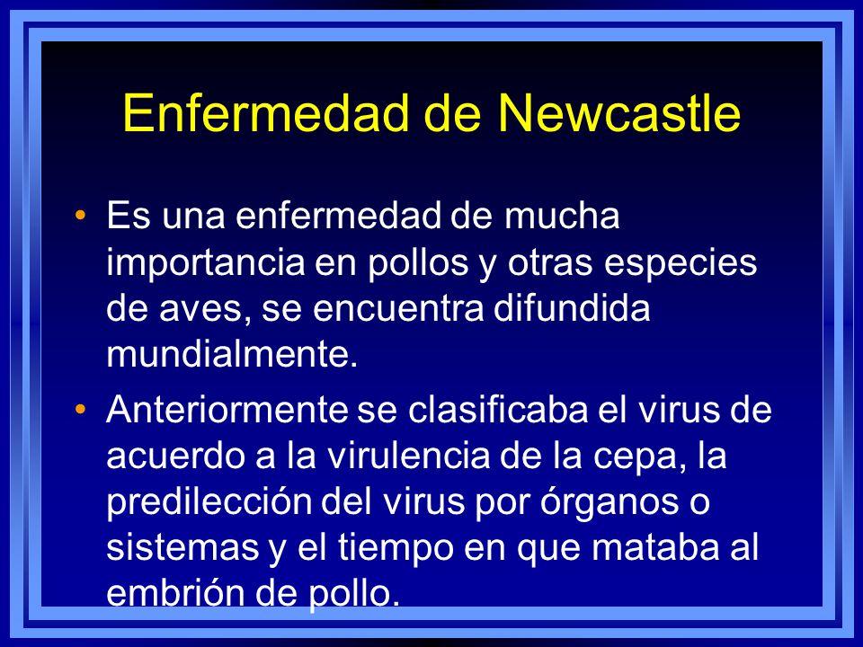 Enfermedad de Newcastle Es una enfermedad de mucha importancia en pollos y otras especies de aves, se encuentra difundida mundialmente. Anteriormente