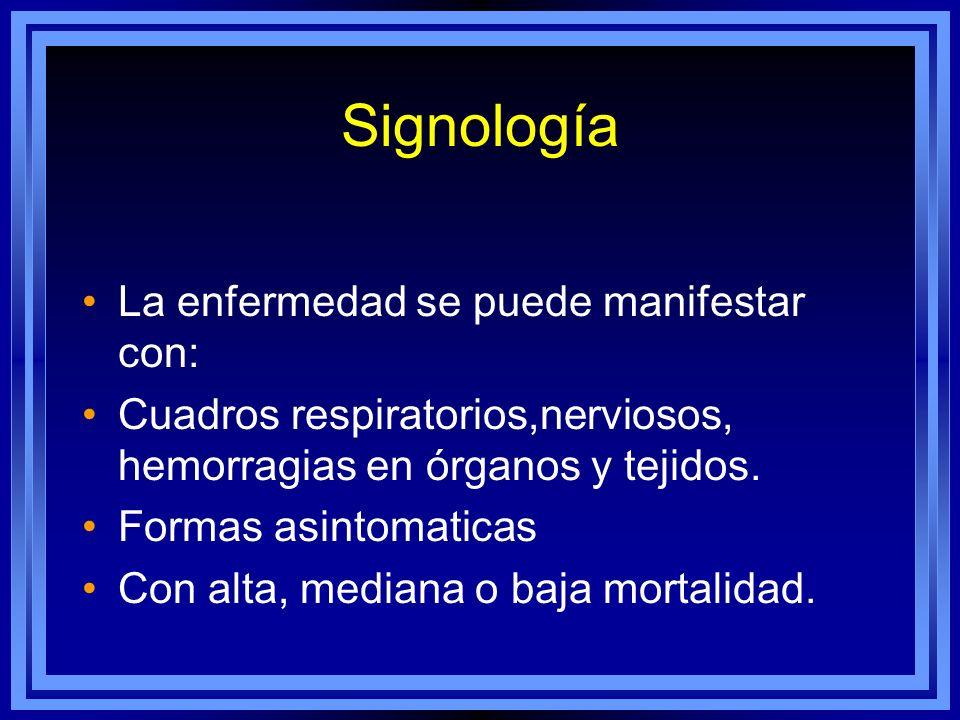 Signología La enfermedad se puede manifestar con: Cuadros respiratorios,nerviosos, hemorragias en órganos y tejidos. Formas asintomaticas Con alta, me
