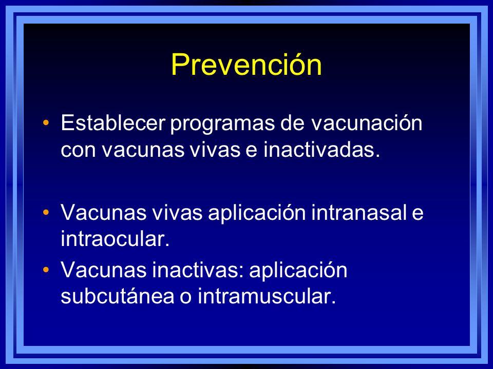 Prevención Establecer programas de vacunación con vacunas vivas e inactivadas. Vacunas vivas aplicación intranasal e intraocular. Vacunas inactivas: a