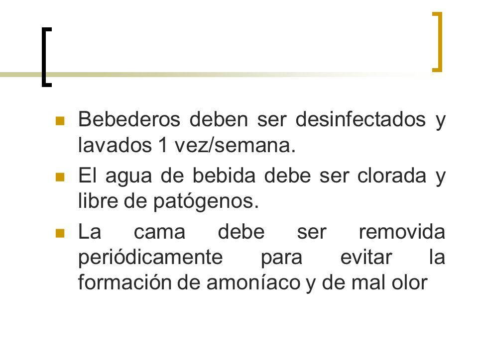 JAULAS SEGURA Y ESPECÍFICA.CONFORTABLE. FÁCIL ACCESO AL AGUA Y AL ALIMENTO.