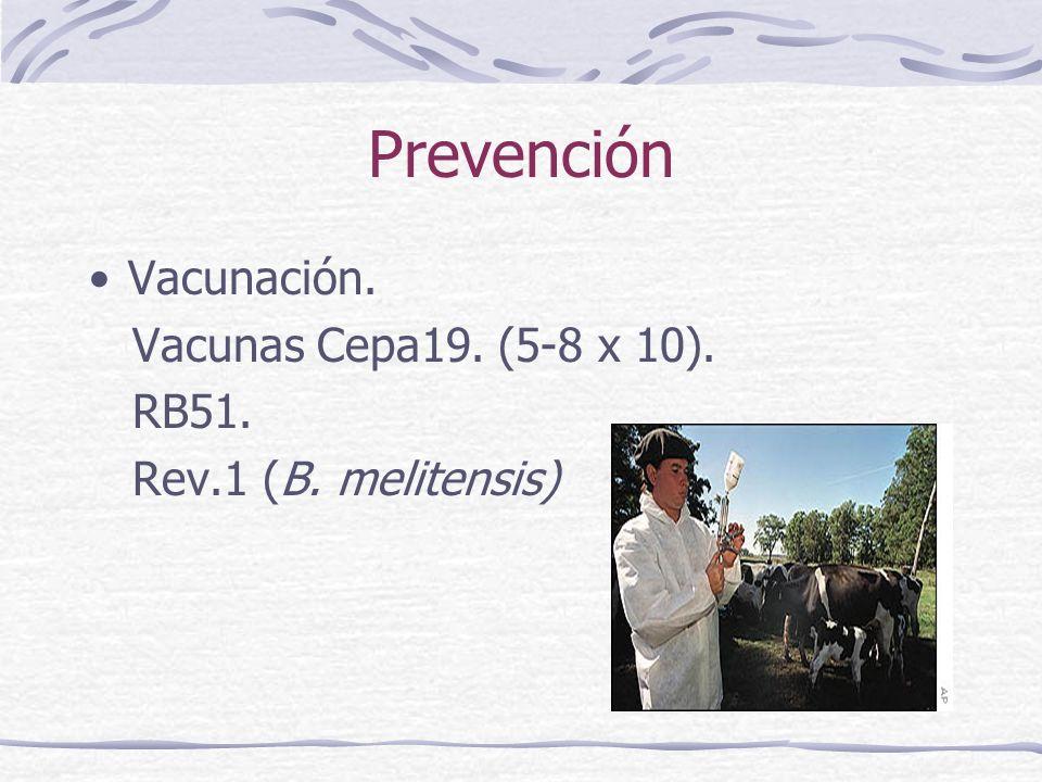 Prevención Vacunación. Vacunas Cepa19. (5-8 x 10). RB51. Rev.1 (B. melitensis)
