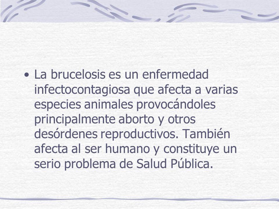 La brucelosis es un enfermedad infectocontagiosa que afecta a varias especies animales provocándoles principalmente aborto y otros desórdenes reproduc
