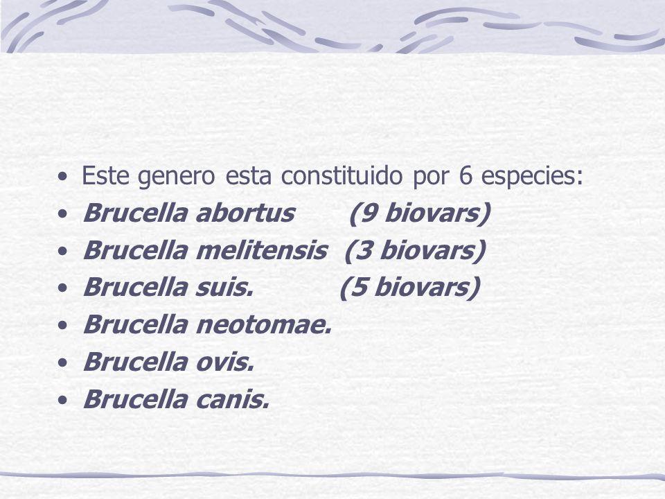 Este genero esta constituido por 6 especies: Brucella abortus (9 biovars) Brucella melitensis (3 biovars) Brucella suis. (5 biovars) Brucella neotomae