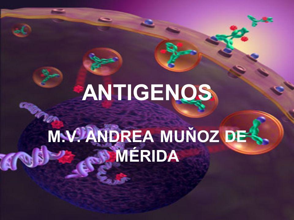 ANTIGENOS M.V. ANDREA MUŇOZ DE MÉRIDA