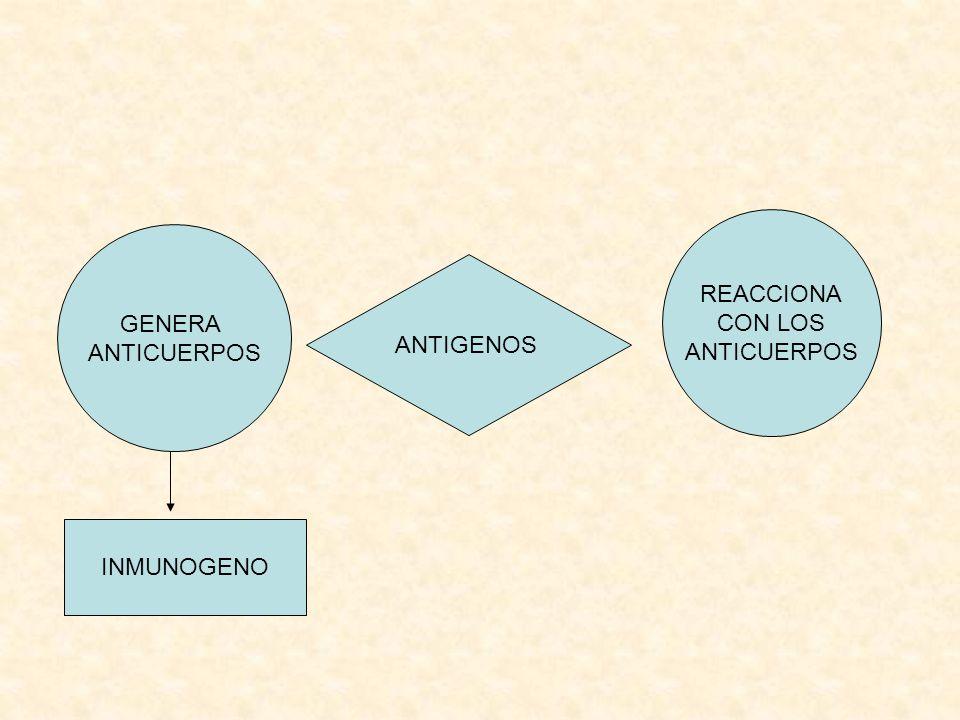 ANTIGENOS GENERA ANTICUERPOS REACCIONA CON LOS ANTICUERPOS INMUNOGENO