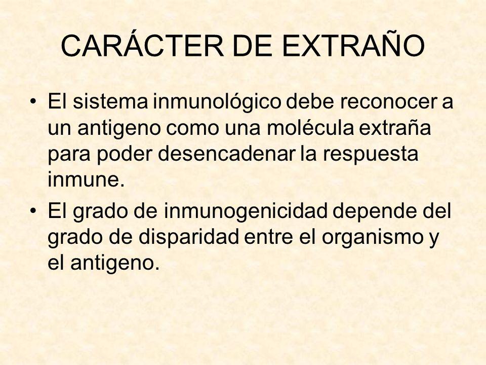 CARÁCTER DE EXTRAÑO El sistema inmunológico debe reconocer a un antigeno como una molécula extraña para poder desencadenar la respuesta inmune. El gra