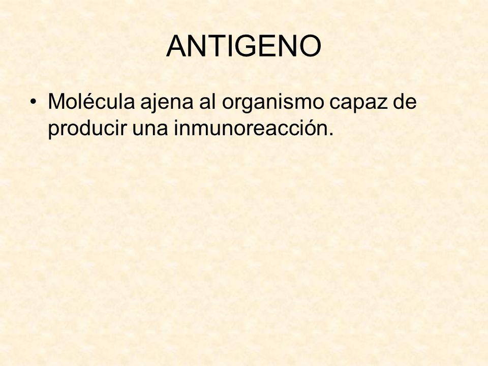 ANTIGENO Molécula ajena al organismo capaz de producir una inmunoreacción.