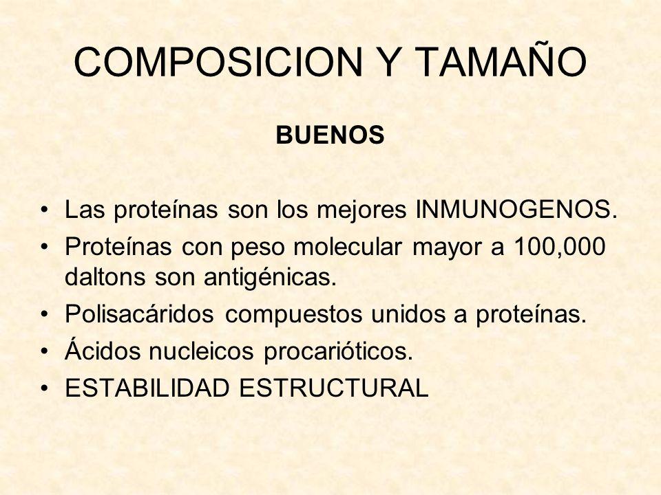 COMPOSICION Y TAMAÑO BUENOS Las proteínas son los mejores INMUNOGENOS. Proteínas con peso molecular mayor a 100,000 daltons son antigénicas. Polisacár