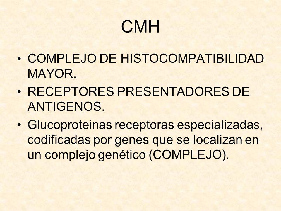 CMH COMPLEJO DE HISTOCOMPATIBILIDAD MAYOR. RECEPTORES PRESENTADORES DE ANTIGENOS. Glucoproteinas receptoras especializadas, codificadas por genes que