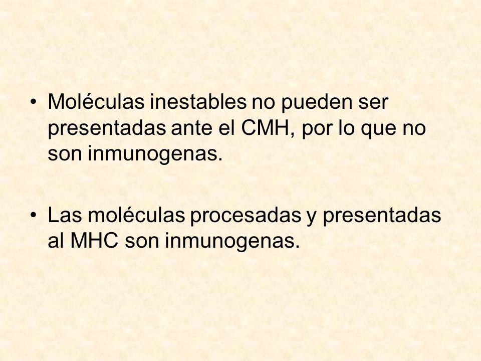Moléculas inestables no pueden ser presentadas ante el CMH, por lo que no son inmunogenas. Las moléculas procesadas y presentadas al MHC son inmunogen