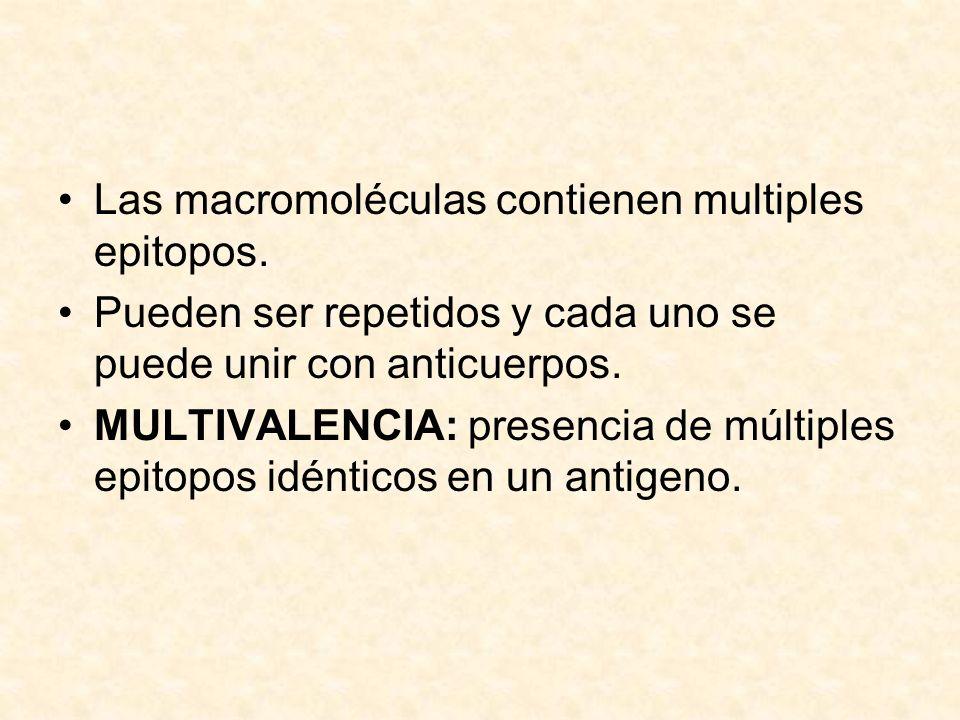 Las macromoléculas contienen multiples epitopos. Pueden ser repetidos y cada uno se puede unir con anticuerpos. MULTIVALENCIA: presencia de múltiples