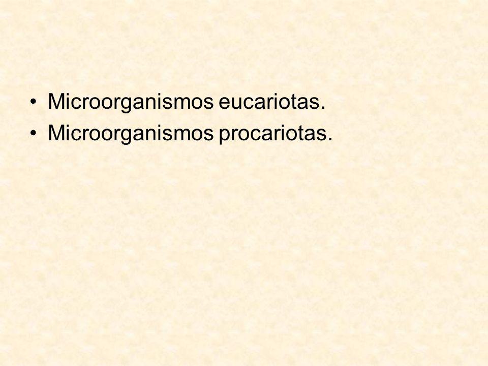 Microorganismos eucariotas. Microorganismos procariotas.