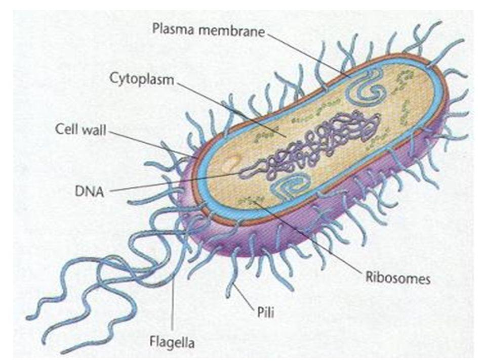 EPITOPOS/DETERMINANTES ANTIGENICOS Sitios concretos de las macromoléculas.