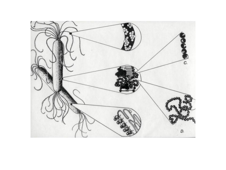 Las macromoléculas contienen multiples epitopos.
