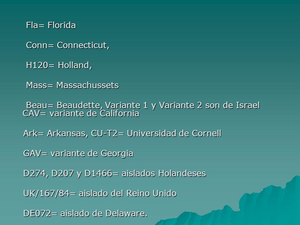 Fla= Florida Fla= Florida Conn= Connecticut, Conn= Connecticut, H120= Holland, H120= Holland, Mass= Massachussets Mass= Massachussets Beau= Beaudette,