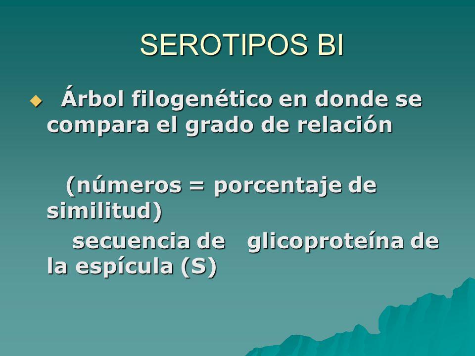 SEROTIPOS BI SEROTIPOS BI Árbol filogenético en donde se compara el grado de relación Árbol filogenético en donde se compara el grado de relación (núm