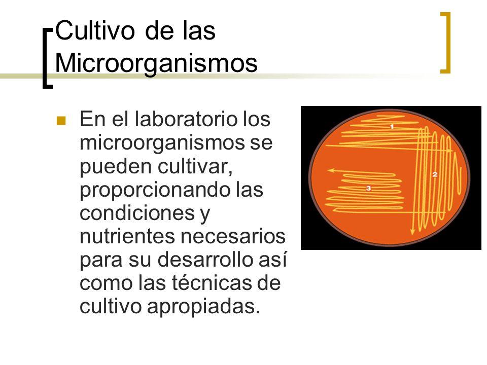 Cultivo de las Microorganismos En el laboratorio los microorganismos se pueden cultivar, proporcionando las condiciones y nutrientes necesarios para s