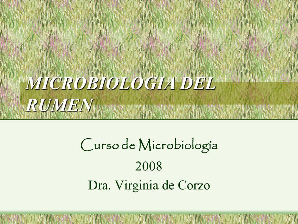 Grupos de Microorganismos Celulolítico (digieren celulosa) Hemicelulolítico (digieren hemicelulosa) Amilolítico (digieren almidón) Proteolítico (digieren proteínas) Utilizan azúcar (utilizan los monosacáridos y los disacáridos) Utilizan ácidos (utilizan substratos tales como ácido láctico, succínico y málico) Productores del amoníaco Sintetizadores de la vitamina Productores del metano