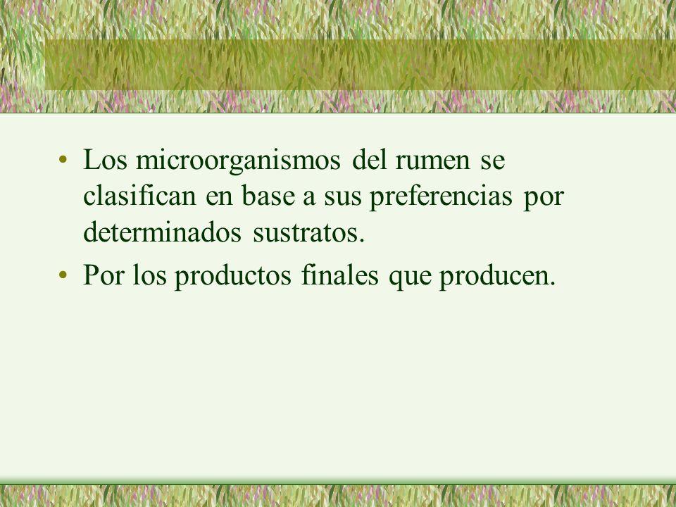 Los microorganismos del rumen se clasifican en base a sus preferencias por determinados sustratos. Por los productos finales que producen.