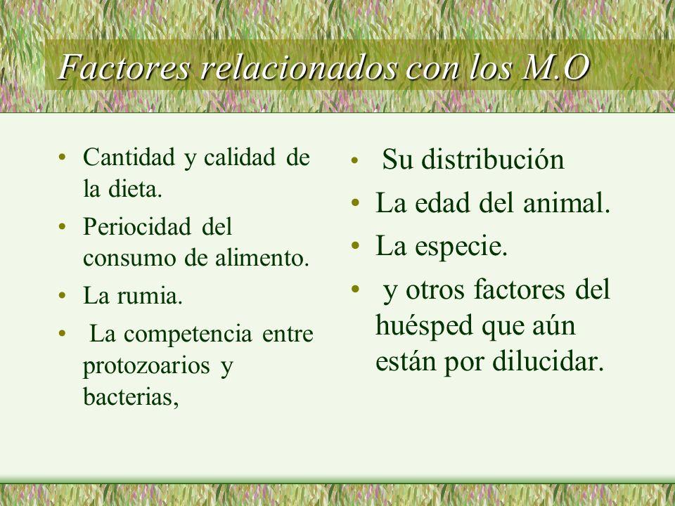 Factores relacionados con los M.O Cantidad y calidad de la dieta. Periocidad del consumo de alimento. La rumia. La competencia entre protozoarios y ba