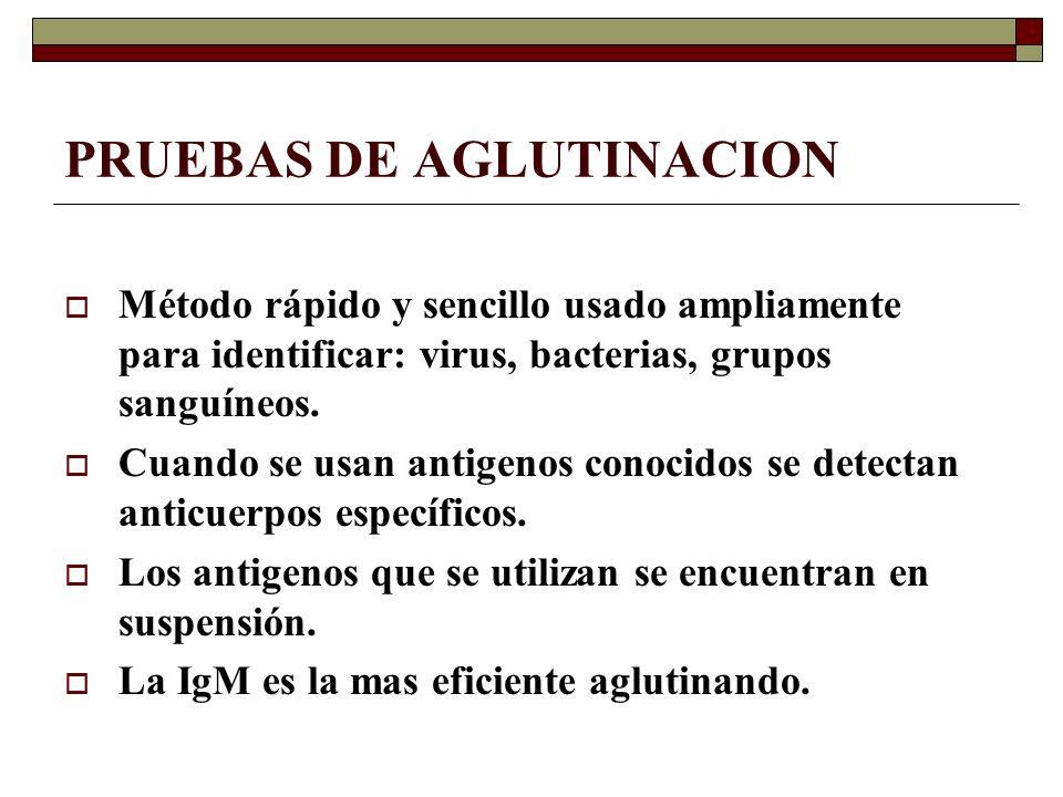 PRUEBAS DE AGLUTINACION Los anticuerpos establecen uniones cruzadas con los antigenos, lo que se visualiza como ¨grumos¨.