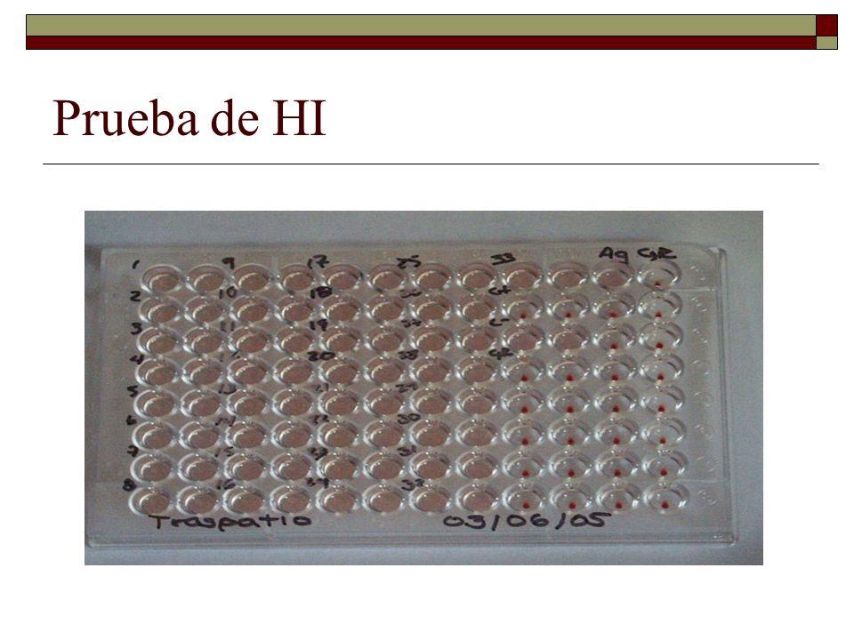 Anticuerpos fluorescentes Estas técnicas utilizan normalmente cultivos celulares (primarios o de líneas estables) infectados con el virus o la bacteria sobre la que se desea comprobar si hay o no anticuerpos en el suero problema.