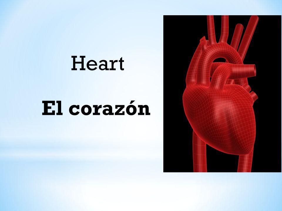 Heart El corazón