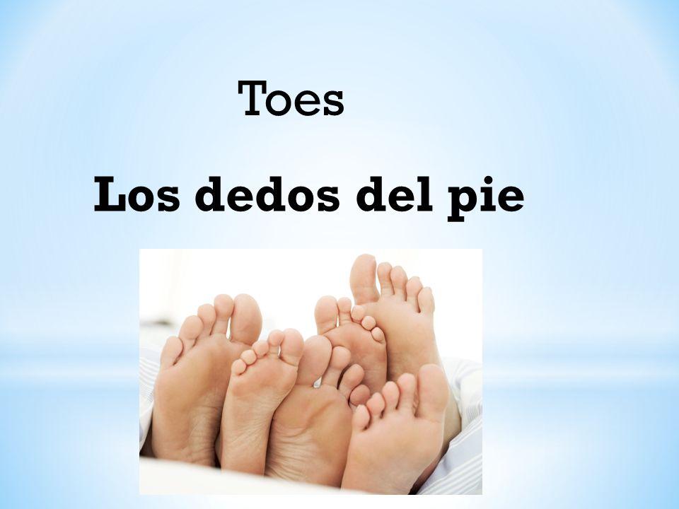 Toes Los dedos del pie