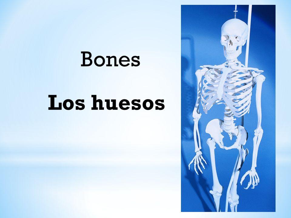 Bones Los huesos