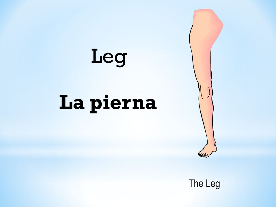 Leg La pierna