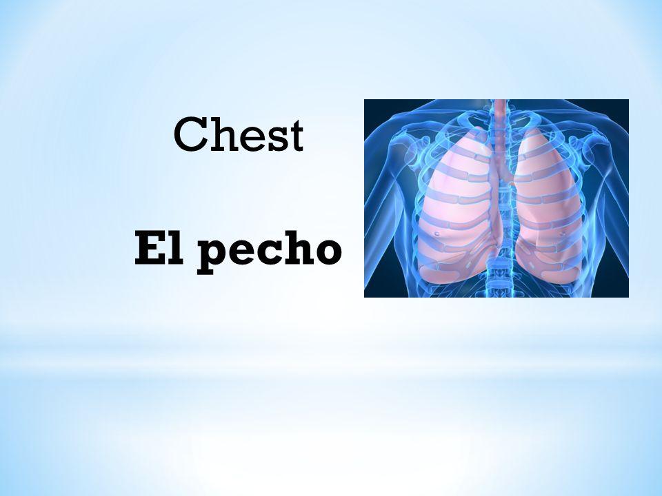 Chest El pecho