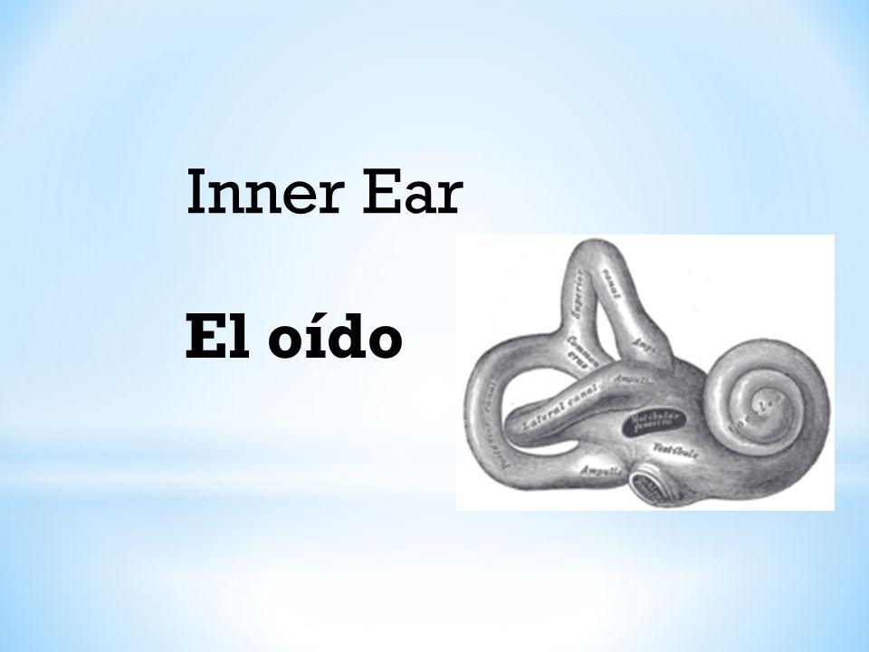 Inner Ear El oído