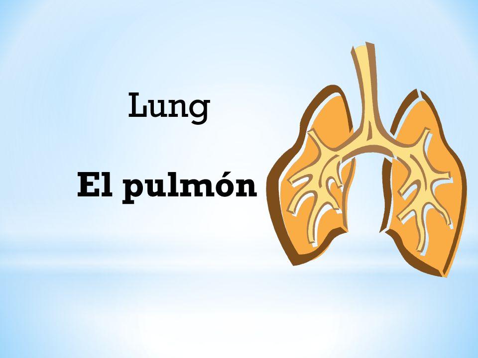 Lung El pulmón