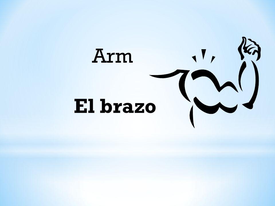 Arm El brazo