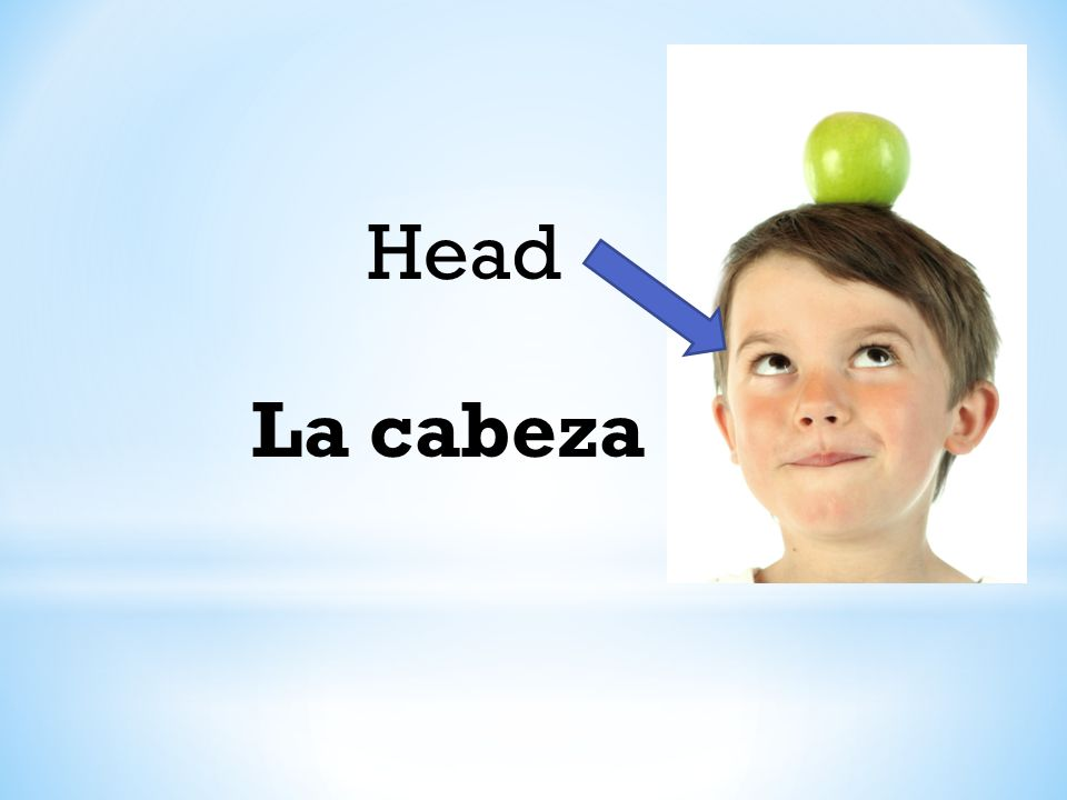 Head La cabeza