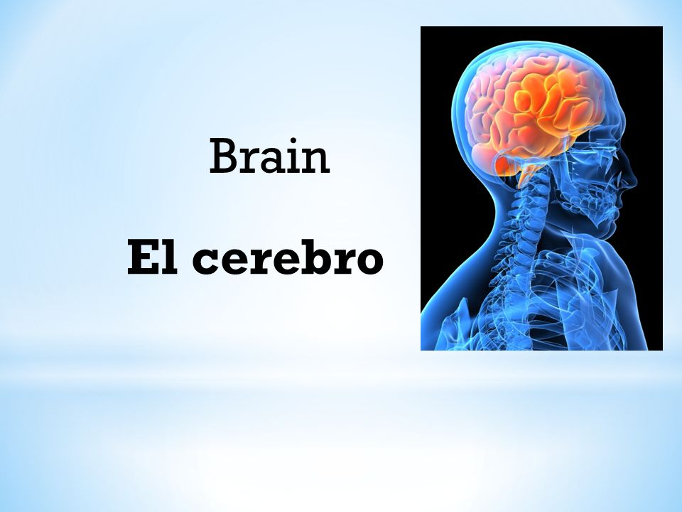 El cerebro Brain