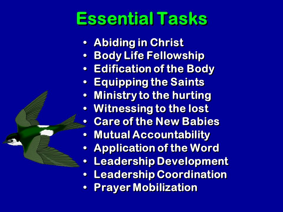 Essential Ministries Essential Ministries Overall Coordination Celebration Worship Teaching the Word Unity of the Body Overseeing Ministries Supportin