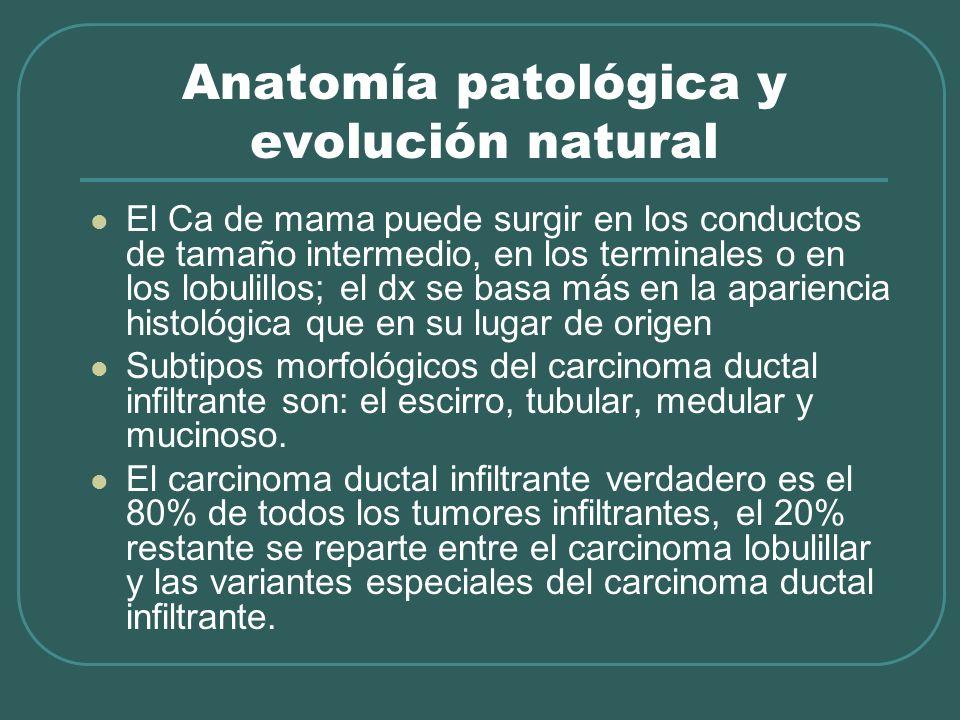 Anatomía patológica y evolución natural El Ca de mama puede surgir en los conductos de tamaño intermedio, en los terminales o en los lobulillos; el dx