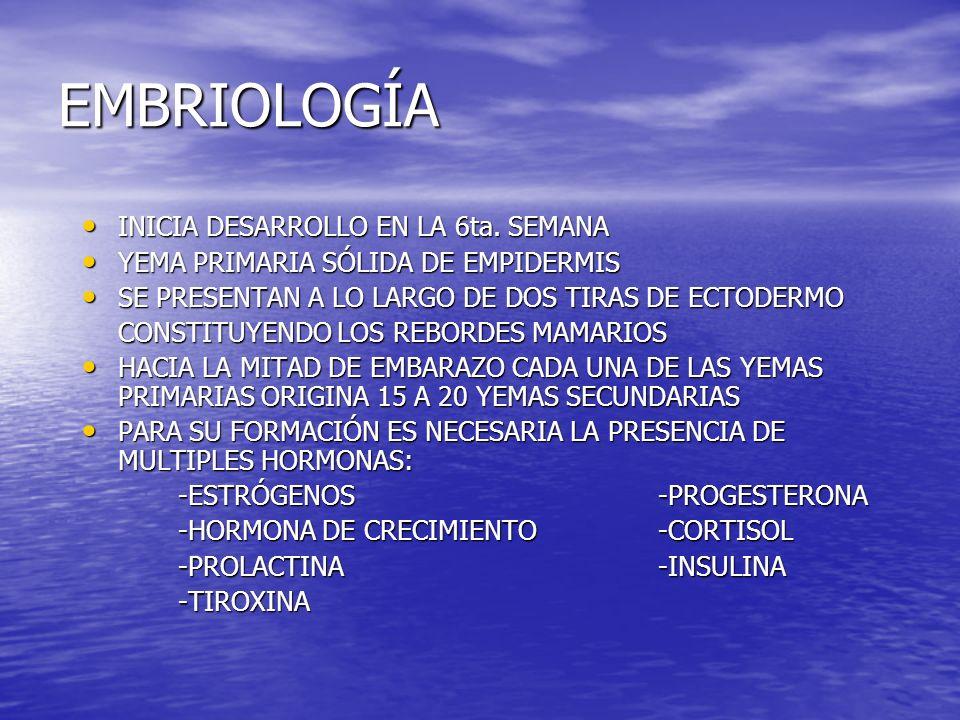 EMBRIOLOGÍA INICIA DESARROLLO EN LA 6ta. SEMANA INICIA DESARROLLO EN LA 6ta. SEMANA YEMA PRIMARIA SÓLIDA DE EMPIDERMIS YEMA PRIMARIA SÓLIDA DE EMPIDER