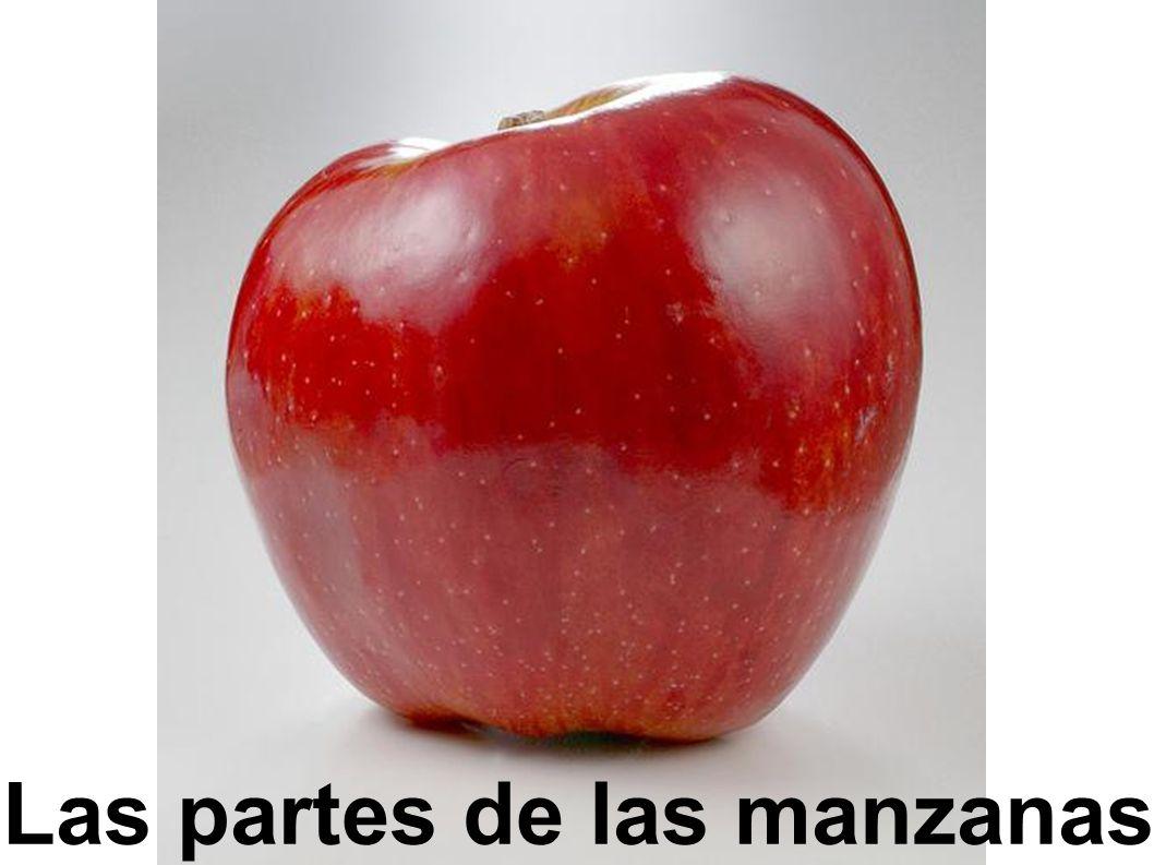 Teile eines Apfels. Las partes de las manzanas